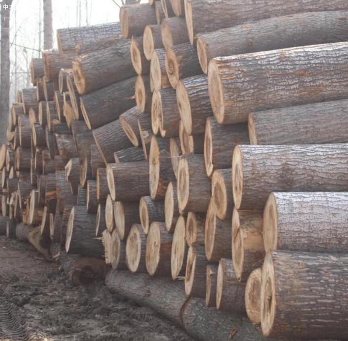 大量白杨木原木林场直销量大从优