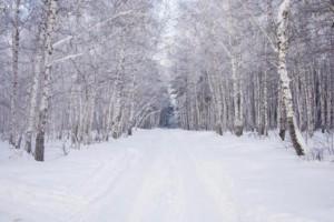 2020年初起俄罗斯森林控制区面积减少了15%