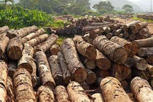 实皆省林业局半年内查获违法木材总共5000余吨