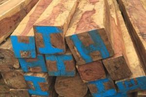 非洲崖豆木,奥氏黄檀原木价格多少钱一吨_2020年5月28日