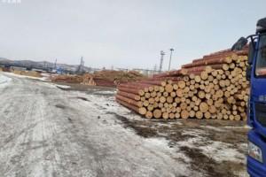 俄罗斯远东海关四个月侦办案值10亿美元木材走私案