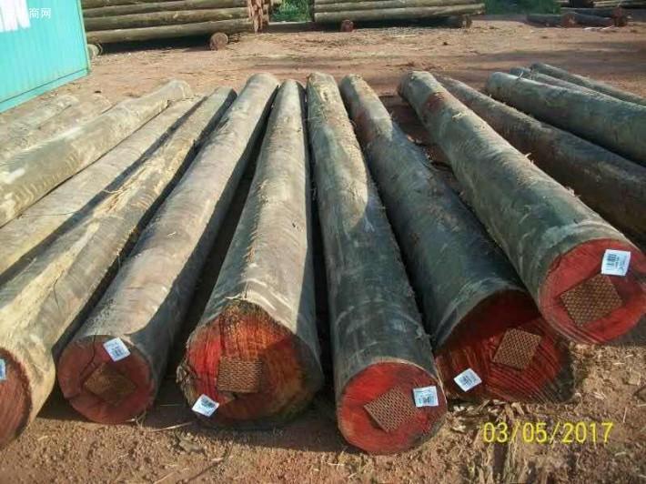 澳洲尤加利原木原产地直销图片