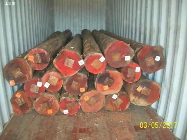 澳洲尤加利原木原产地直销价格