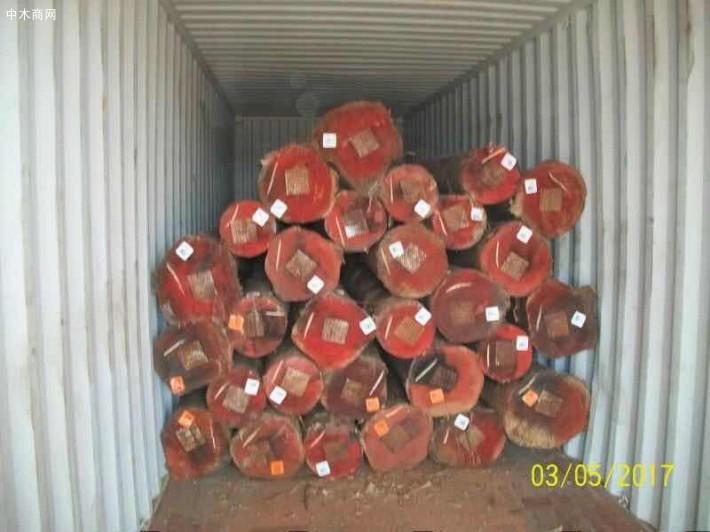 澳洲尤加利原木原产地直销厂家