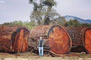 乌金木是什么木材?是红木吗?