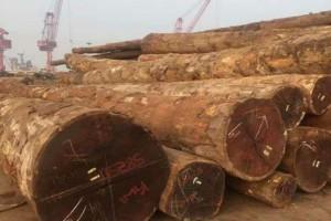 张家港菠萝格原木直径价格70以上3950元/立方米