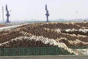 2020年1-5月新民洲港已接卸进口木材101.17万立方米