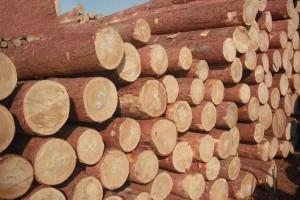绥芬河口岸俄罗斯樟子松原木价格多少钱一立方米_2020年6月1日