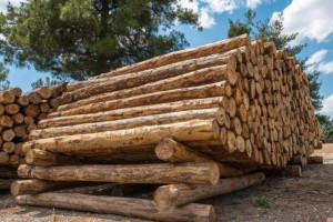 今年我国国内木材缺口或将达到2亿立方
