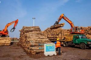 今年新民洲木材港口已接卸进口木材101.17万立方米