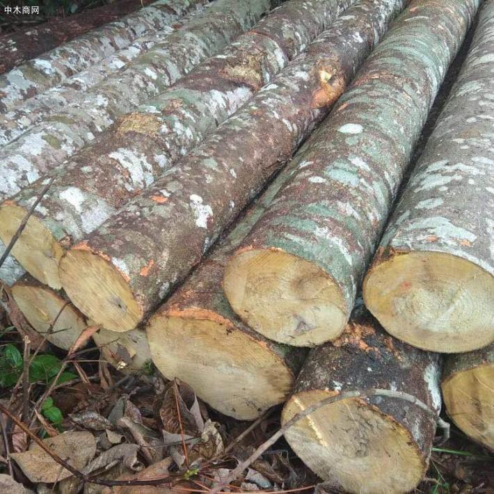 印度尼西亚轻木原木生产加工视频