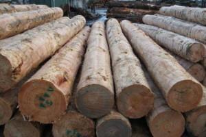 辐射松原木板材的整体进口趋势呈现明显下降