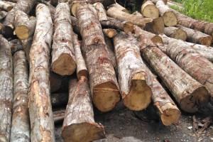 山杂木原木3000方低价出售