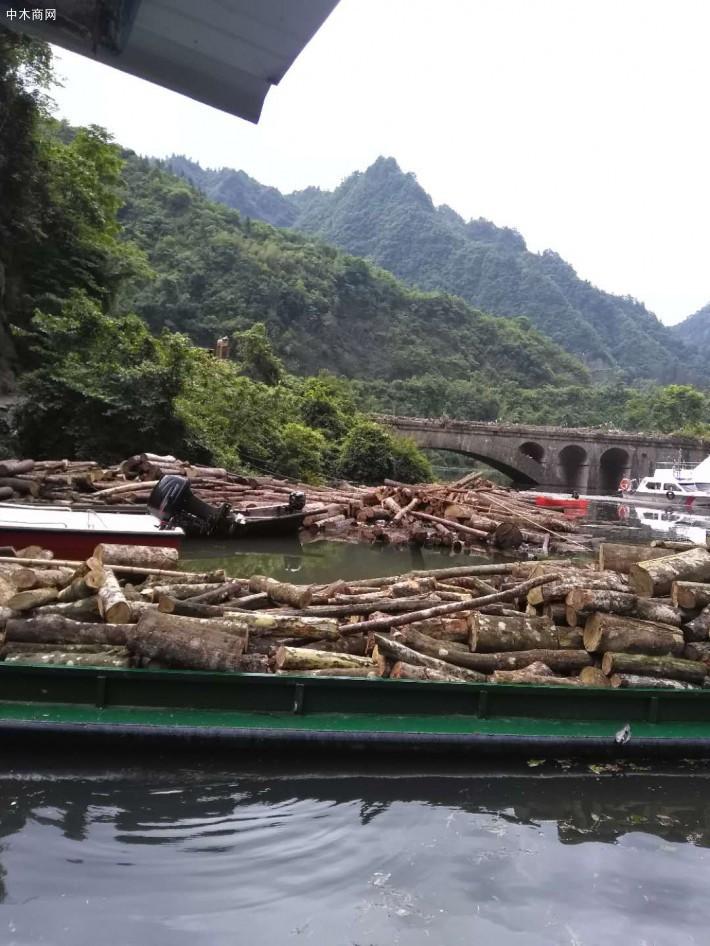 硬杂木原木生产厂家高清图片