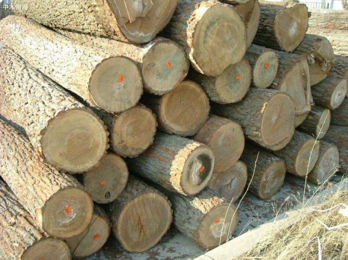 硬杂木原木生产厂家高清图片价格