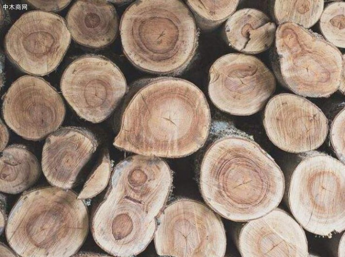 硬杂木原木生产厂家高清图片采购