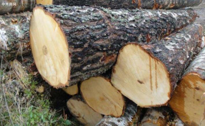 硬杂木原木生产厂家高清图片品牌