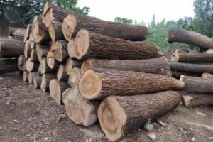 硬杂木原木生产厂家批发价格