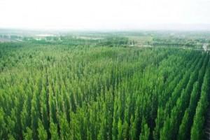 全国生态林业呈高速稳定增长态势6年增长百分之64