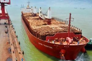 中国对软木原木与木材的进口需求达到2023年