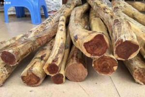 越南木材出口产业靠新市场实现增长
