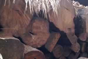 伯利兹黄檀是国标红木吗?有什么特征?
