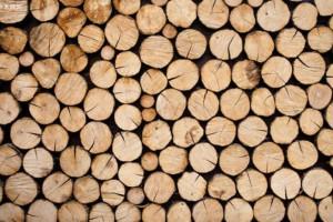中国林科院,山东省林科院领导专家到义堂镇调研木材发展工作