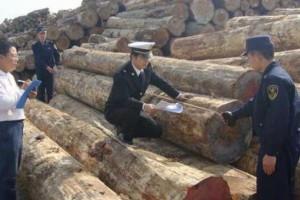 绥芬河进口原木检疫监管场地投用