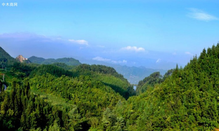 国有林场改革方案要严守保生态保民生的底线