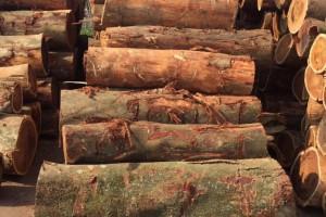 全球原木供应对木材产品的需求恢复仍要一段时间