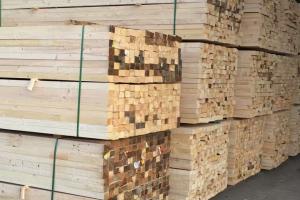 来宾到二塘镇开展木材加工产业调研活动