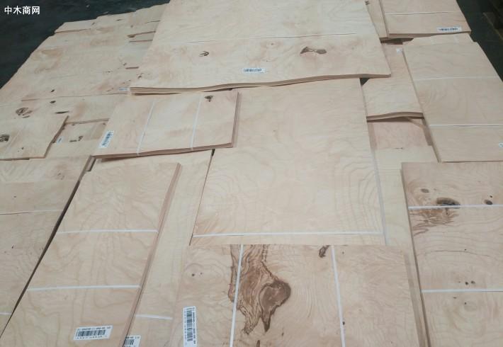 白栓树瘤木皮,白栓树瘤天然木皮,白栓树瘤染色木皮,染色木皮价格