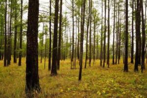俄罗斯联邦林业署宣布森林恢复工作已完成72%的任务量