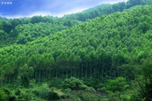 广东省林业产业产值连续11年位居全国第一
