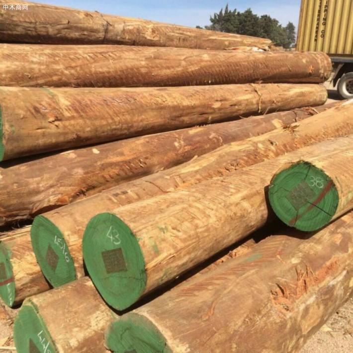 南美洲原木价格行情回升_2020年6月24日