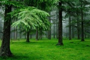 预计到2024年欧洲云杉木材受损数量将高达5亿立方米