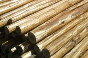 杉木小径原木价格多少钱一立方米_2020年6月29日