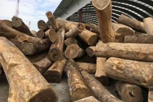 南美洲巴拉圭发生一起严重绿檀木非法采伐案件