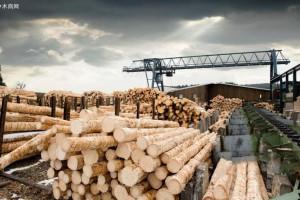 新冠病毒疫情对热带木材行业影响有多大?