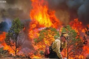 俄罗斯伊尔库茨克州两地因森林大火进入紧急状态