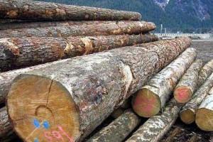 """加拿大出口我国原木木材""""再次""""检测出害虫"""