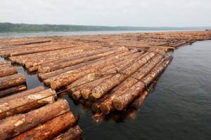 交通运输部官网发布木材水运降低港口收费政策延续到年底