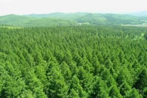 新《中华人民共和国森林法》2020年7月1日起实施