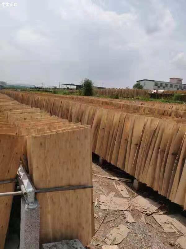 安徽杨木三拼生产厂家批发价格品牌