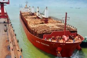 海运运费上涨对木材贸易产生巨大影响