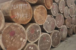 进口沙比利原木厂家批发价格