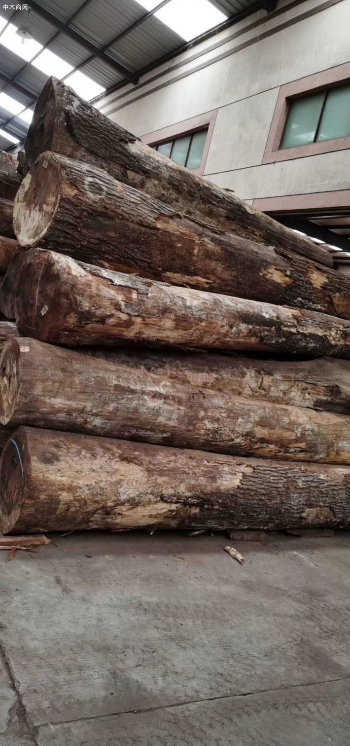 美国红橡木原木批发价格图片