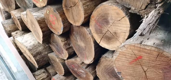 美国红橡木原木批发价格品牌