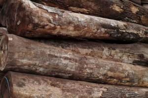 美国红橡木原木批发价格