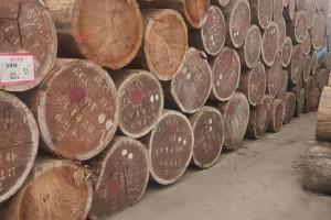 非洲进口沙比利原木高清视频